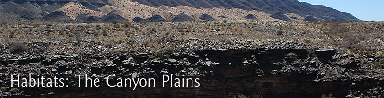 Habitats: The Canyon Plains